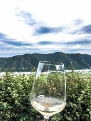 Wachau, Wine
