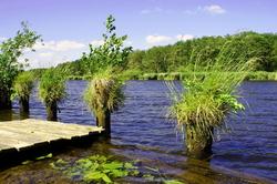 Peene river nature