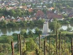 Neckar & Grapes