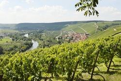 Vineyard close to Volkach