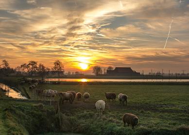 """Premium Authentiek Nederland & Duitsland tour    'De Noordelijke route"""""""