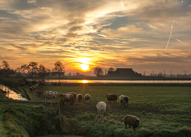 "Premium authentieke Nederland & Duitsland reis   'De Noord route"""