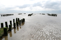 UNESCO haritage wadden-sea