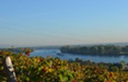 Rhine river, Nierstein