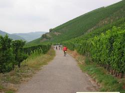 Riding through the vineyards