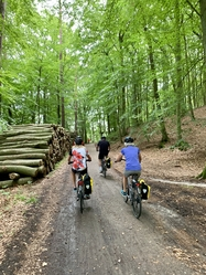 Usedom forest