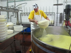 Cheese maker at cheesefarm