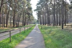 Brandenburg forest